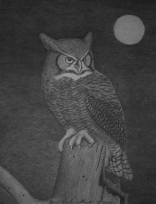 An owl in the moonlight