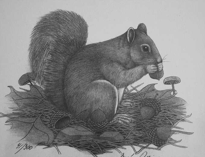 Nutcracker Nutcracker squirrel