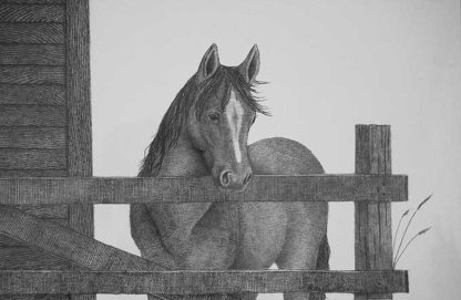 A horse patiently waiting to be fed
