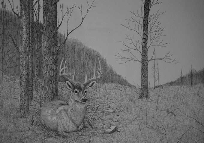 A deer alone in the woods