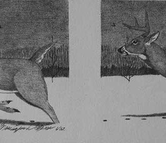 Two deer running