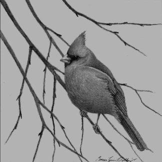 Cardinal by Bruce Dellinger