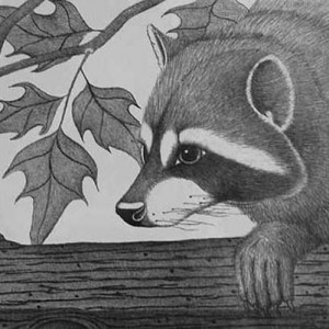 A racoon by the water's edge