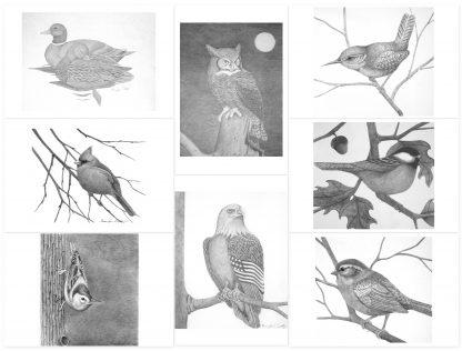 bird notecards